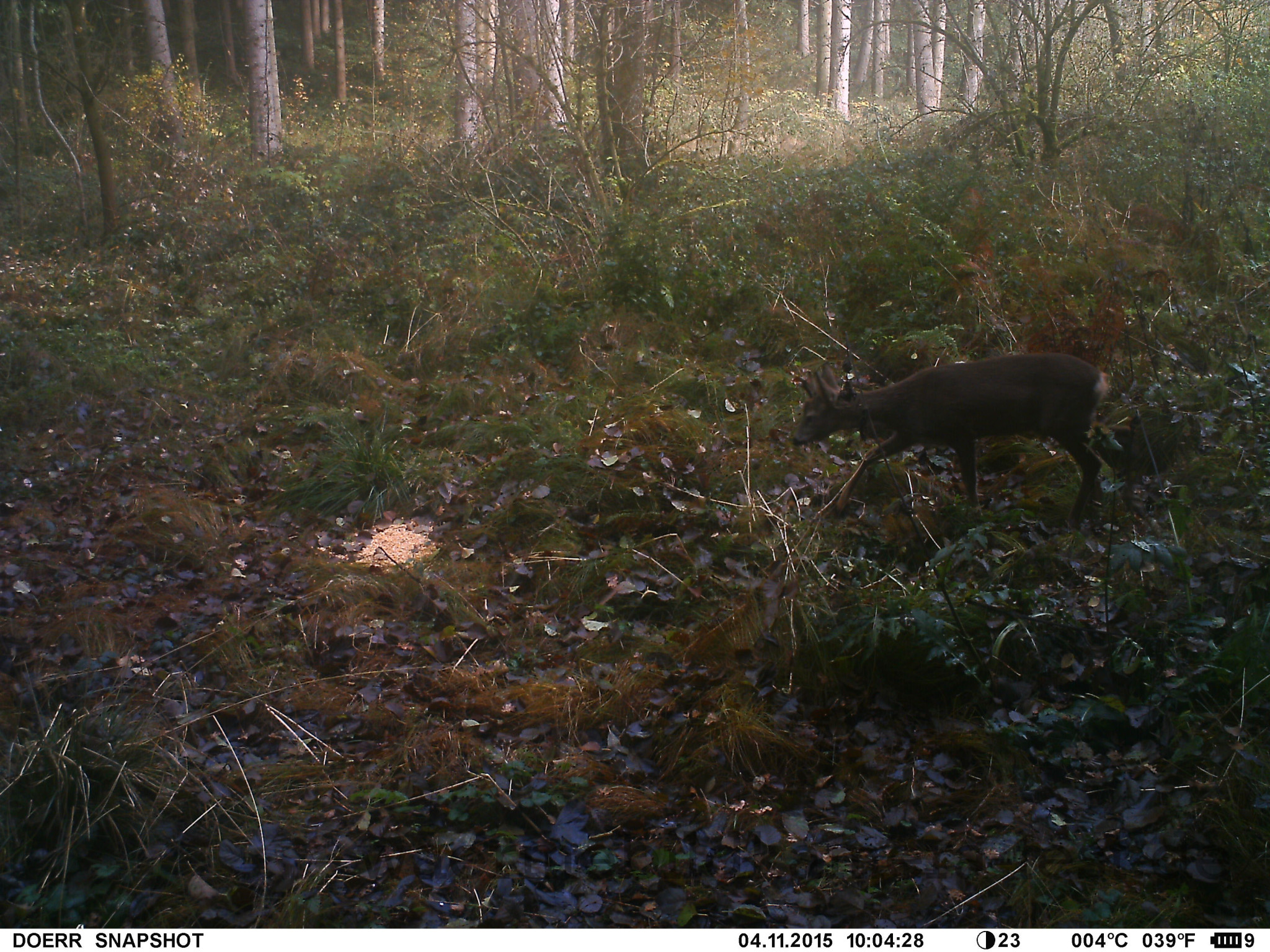 Camera Traps - Animal observation with infrared technology